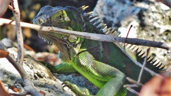 Fotodagbog fra Florida - Dyreliv på The Keys - Rejsdiglykkelig.dk
