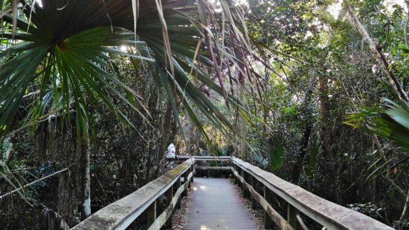 Fotodagbog fra Florida - Everglades National Park - Rejsdiglykkelig.dk