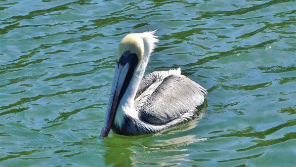 Fotodagbog fra Florida - Fugl på Islamorada i Florida Keys - Rejsdiglykkelig.dk