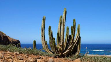 15 Bedste Oplevelser på Tenerife - Rejs Dig Lykkelig