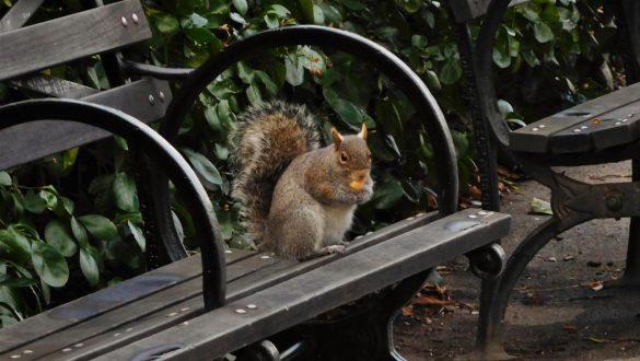 Fotodagbog fra New York - Egern i Battery Park - Rejsdiglykkelig.dk