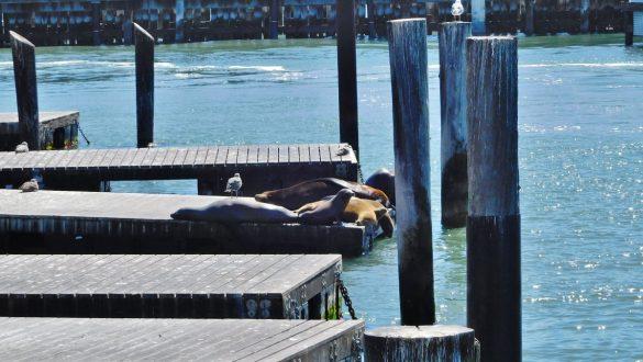 Fotodagbog fra San Francisco - Pier 39 på Fishermans Wharf - Rejsdiglykkelig.dk