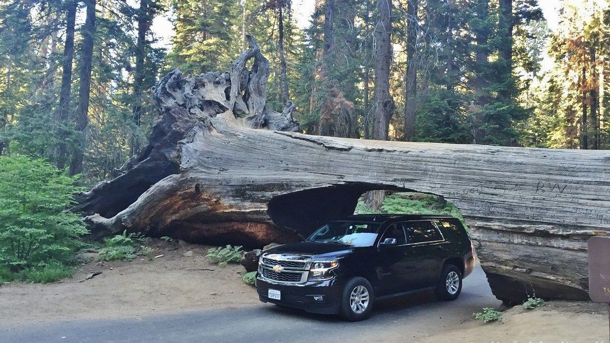 Dagsprogram i det vestlige USA - Tunnel Log i Sequoia National Park - www.rejsdiglykkelig.dk