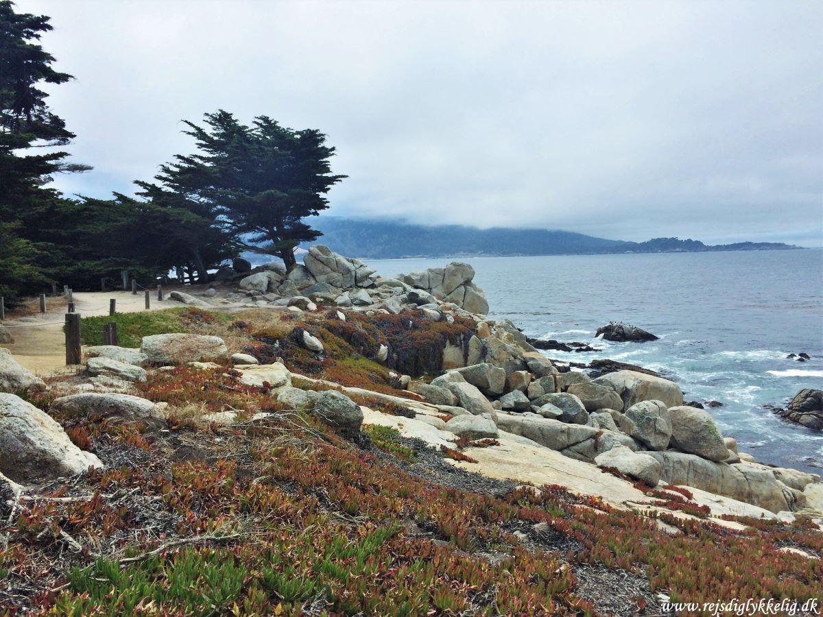 36 oplevelser i Californien - Monterey - Rejsdiglykkelig.dk