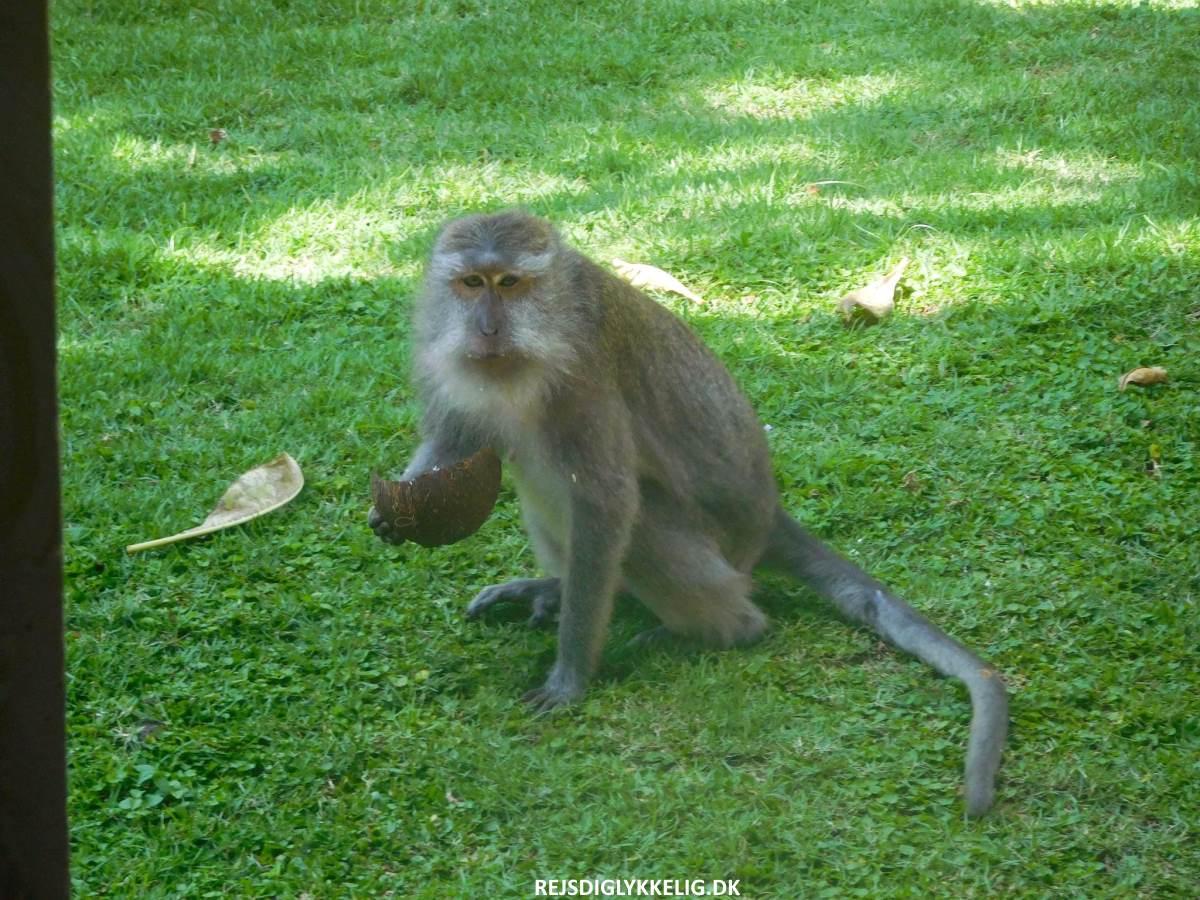 Monkey Forest - Rejs Dig Lykkelig