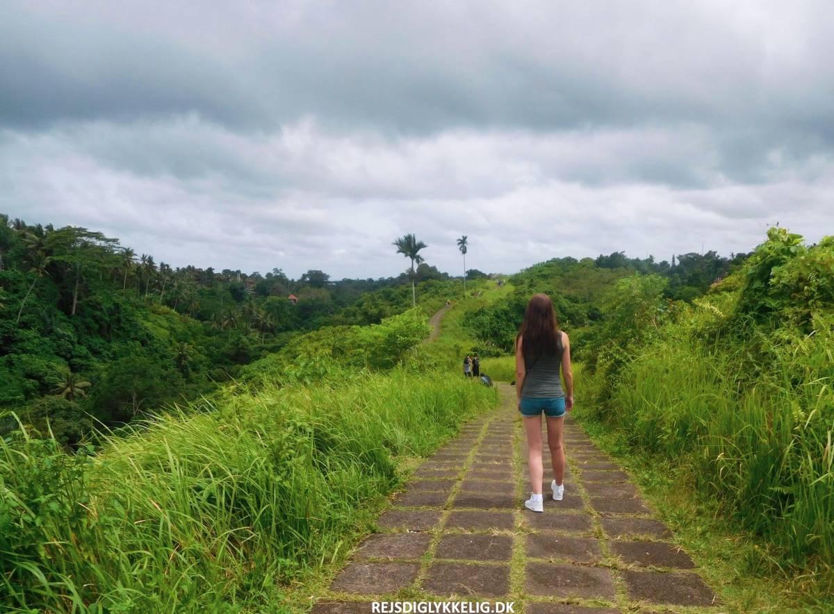 Campuhan Ridge Walk - Rejs Dig Lykkelig