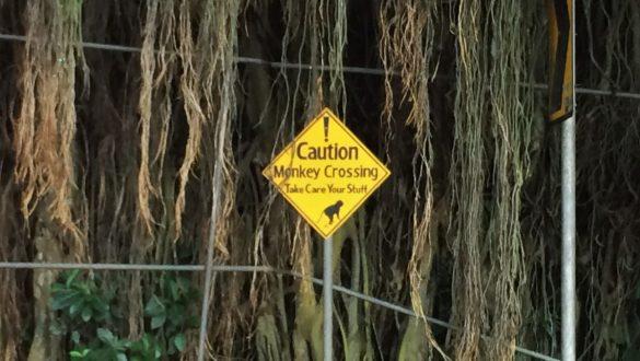 Fotodagbog fra Ubud - Caution Monkey crossing - Rejsdiglykkelig.dk