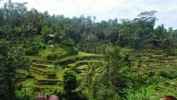 Fotodagbog fra Ubud - Tegallalang Rice Terrace - Rejsdiglykkelig.dk