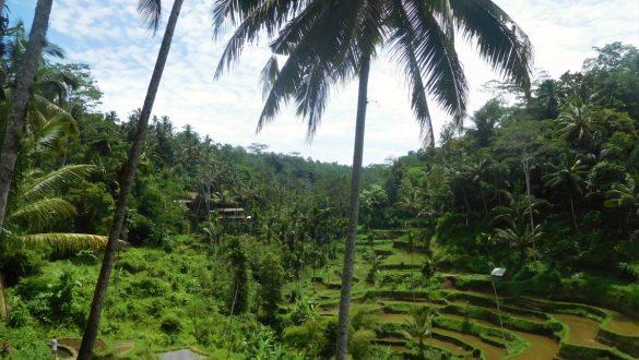 Fotodagbog fra Ubud - Tegallalang Rice Terrace på Bali - Rejsdiglykkelig.dk