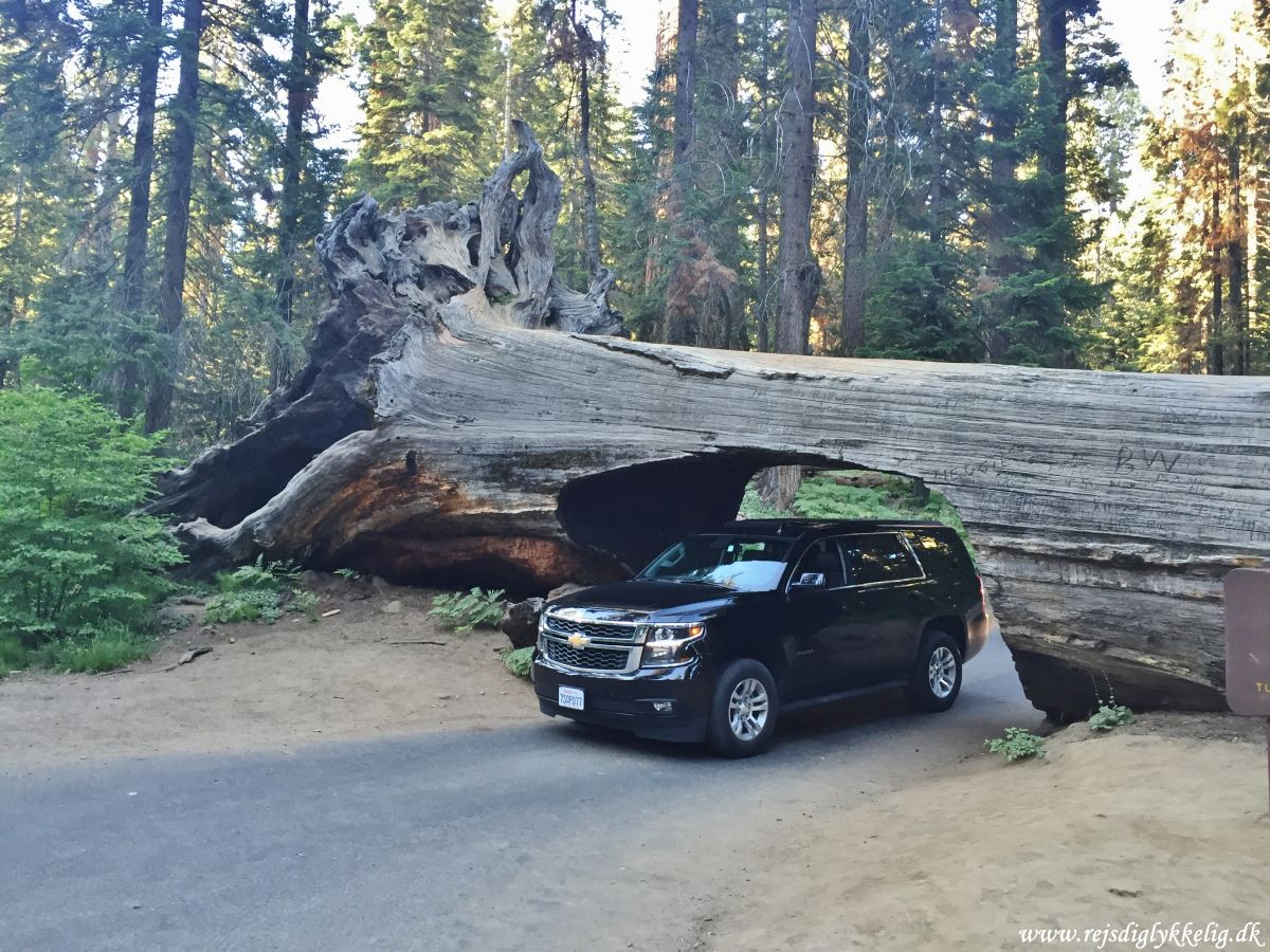 12 af de bedste national parker i USA - Sequoia National Park - Rejsdiglykkelig.dk