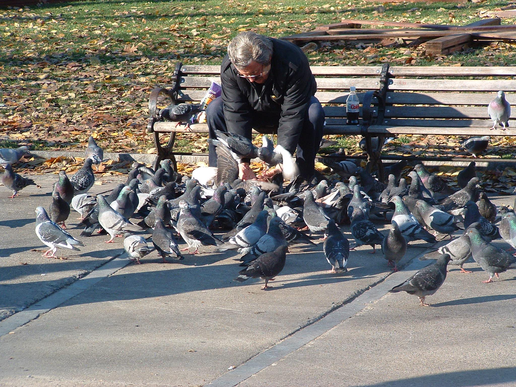 20 underlige love og regler i Singapore - Fodring af duer - Rejsdiglykkelig.dk