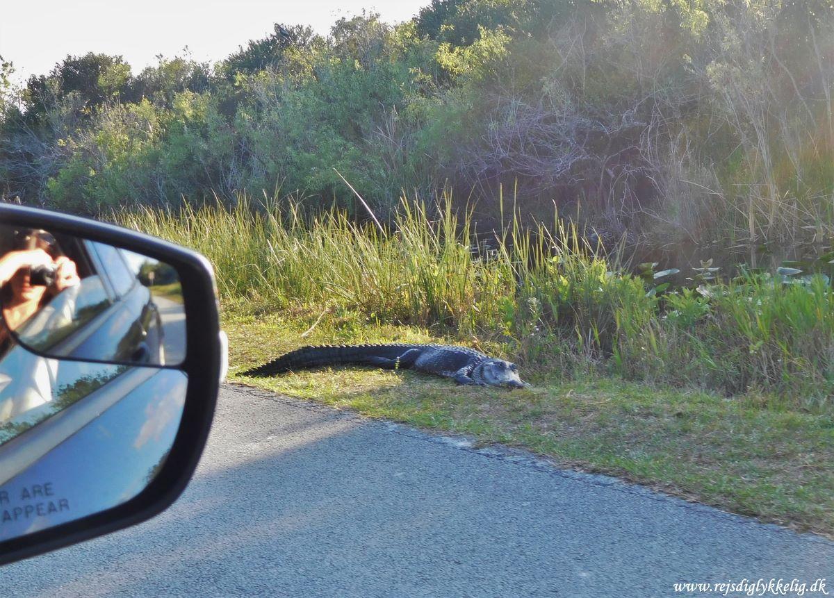 De 5 absolut bedste oplevelser i Florida - Everglades National Park - Rejsdiglykkelig.dk