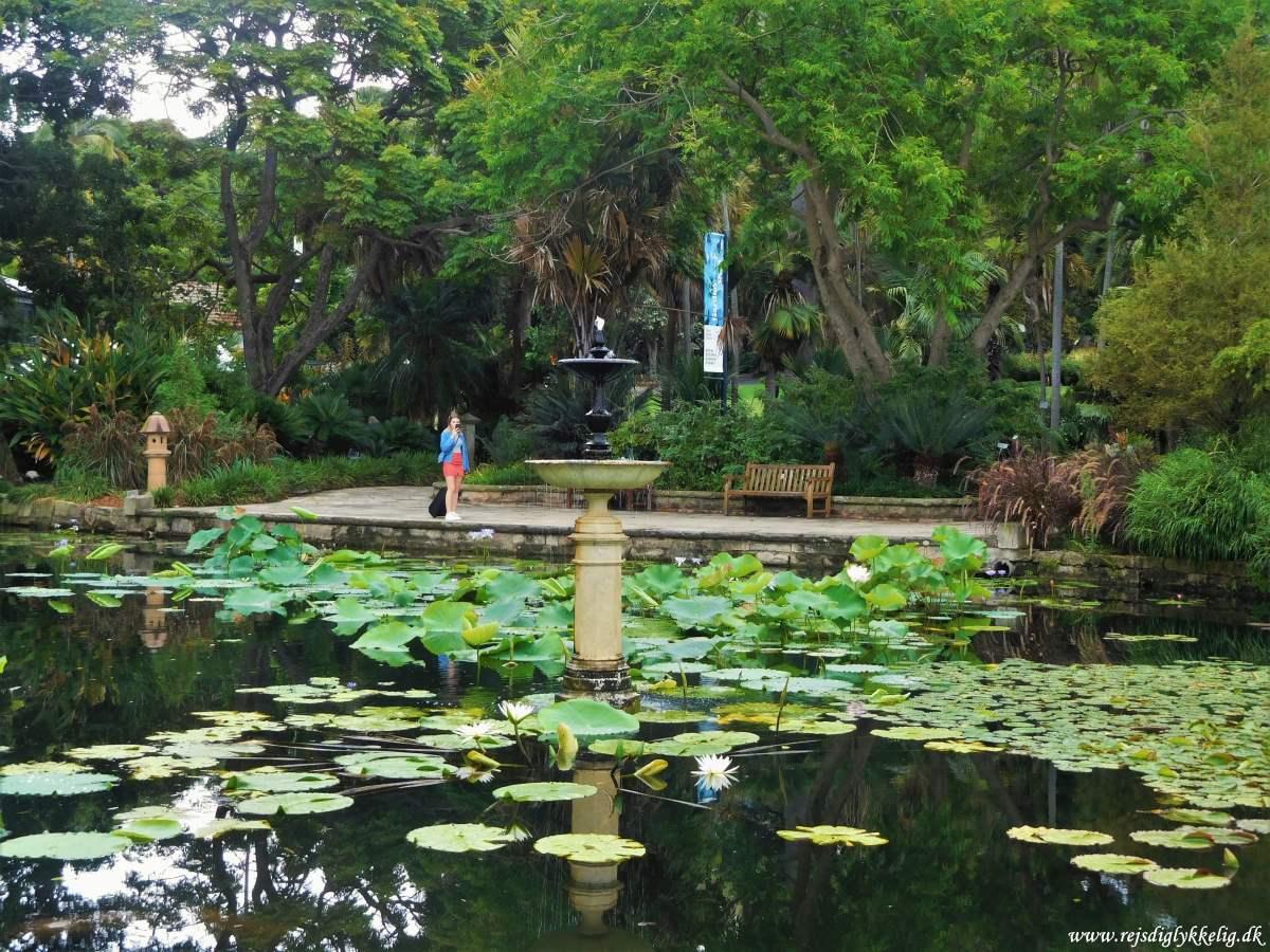 De bedste oplevelser i Sydney - Royal Botanic Gardens - Rejs Dig Lykkelig