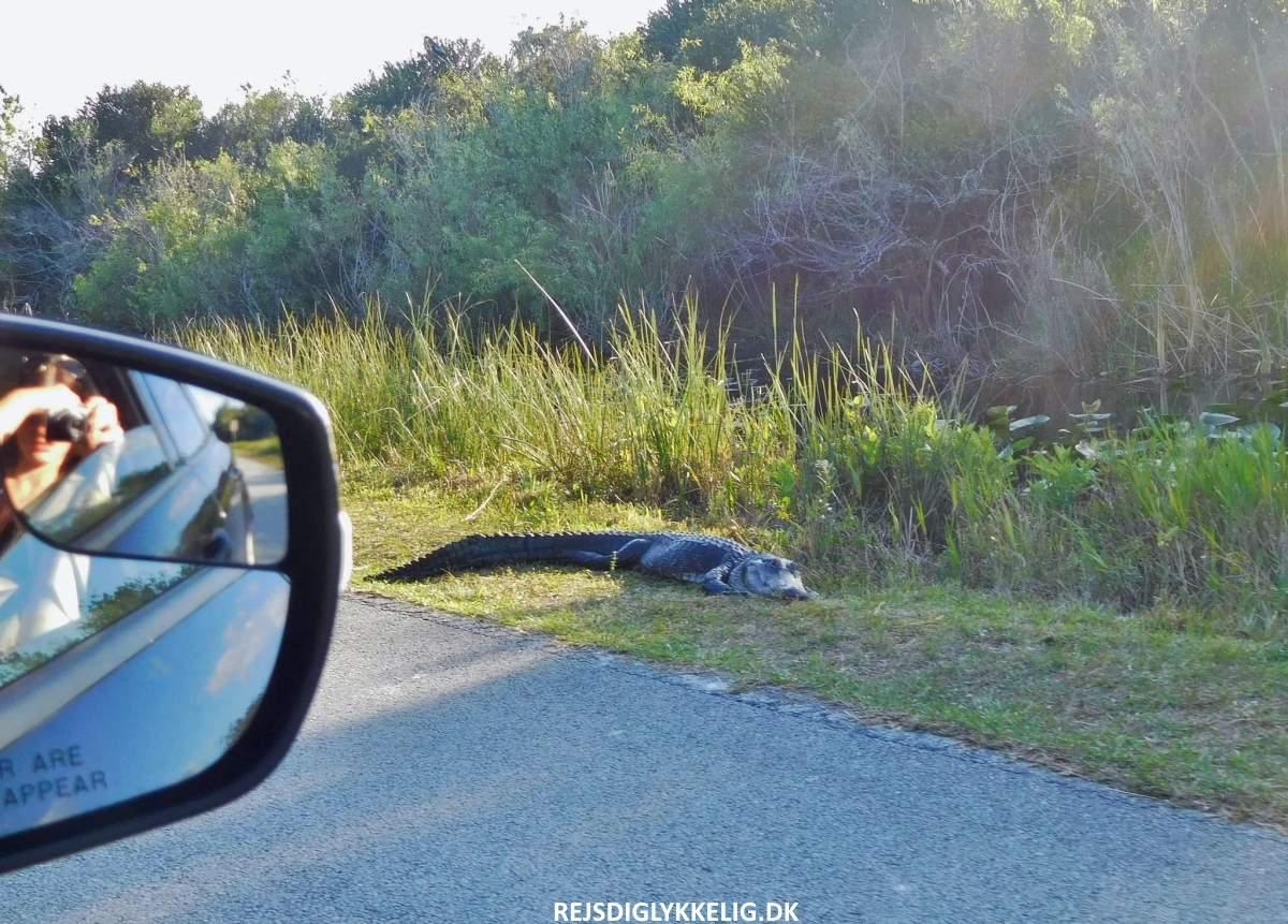 Everglades - Rejs Dig Lykkelig