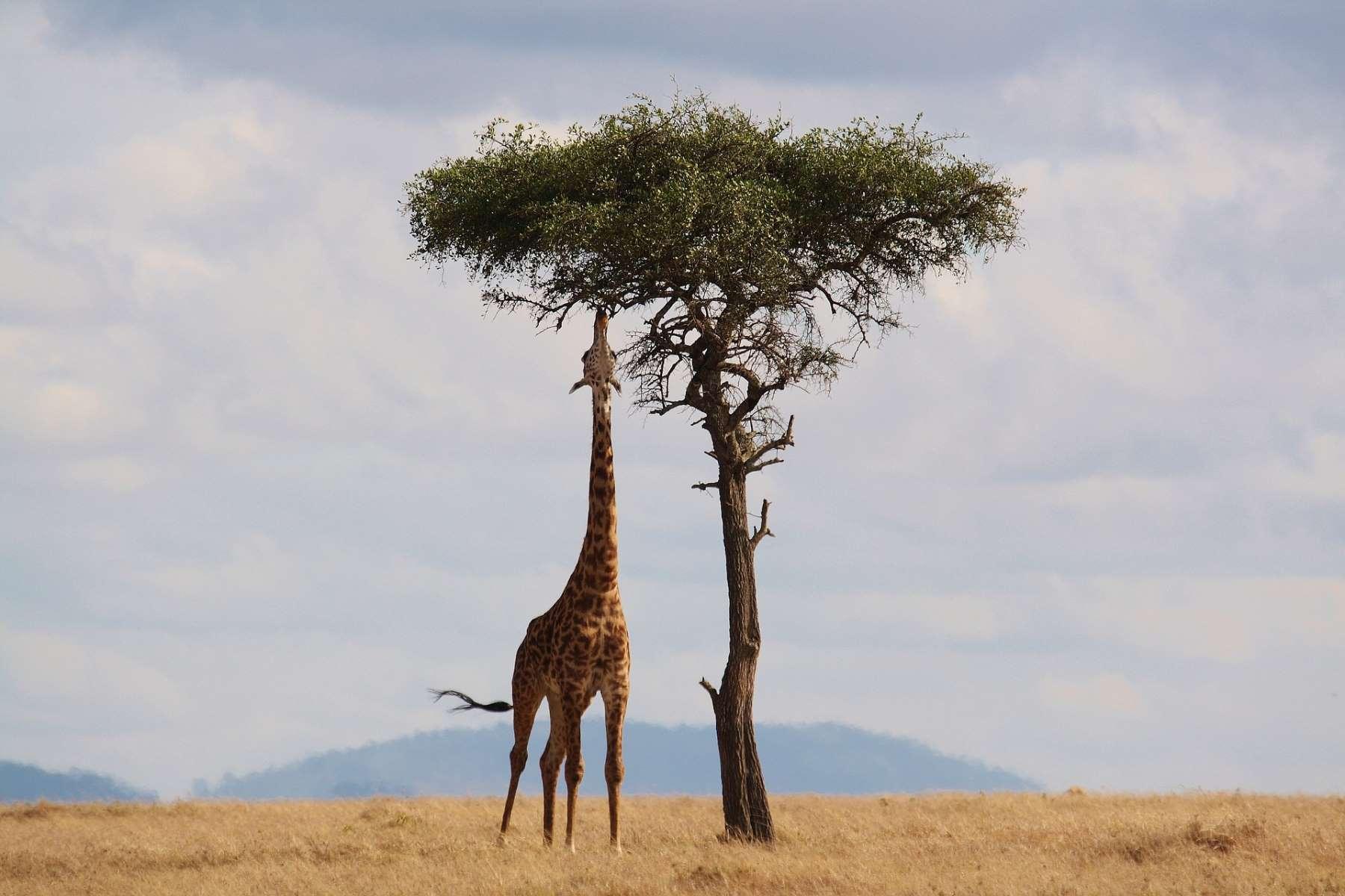 Destinationer Cover - Afrika - Rejs dig lykkelig