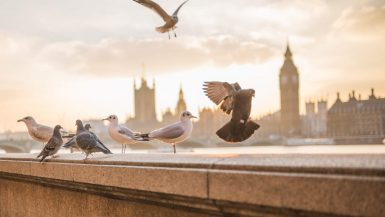London Bucketlist 60+ oplevelser i London - Rejs Dig Lykkelig