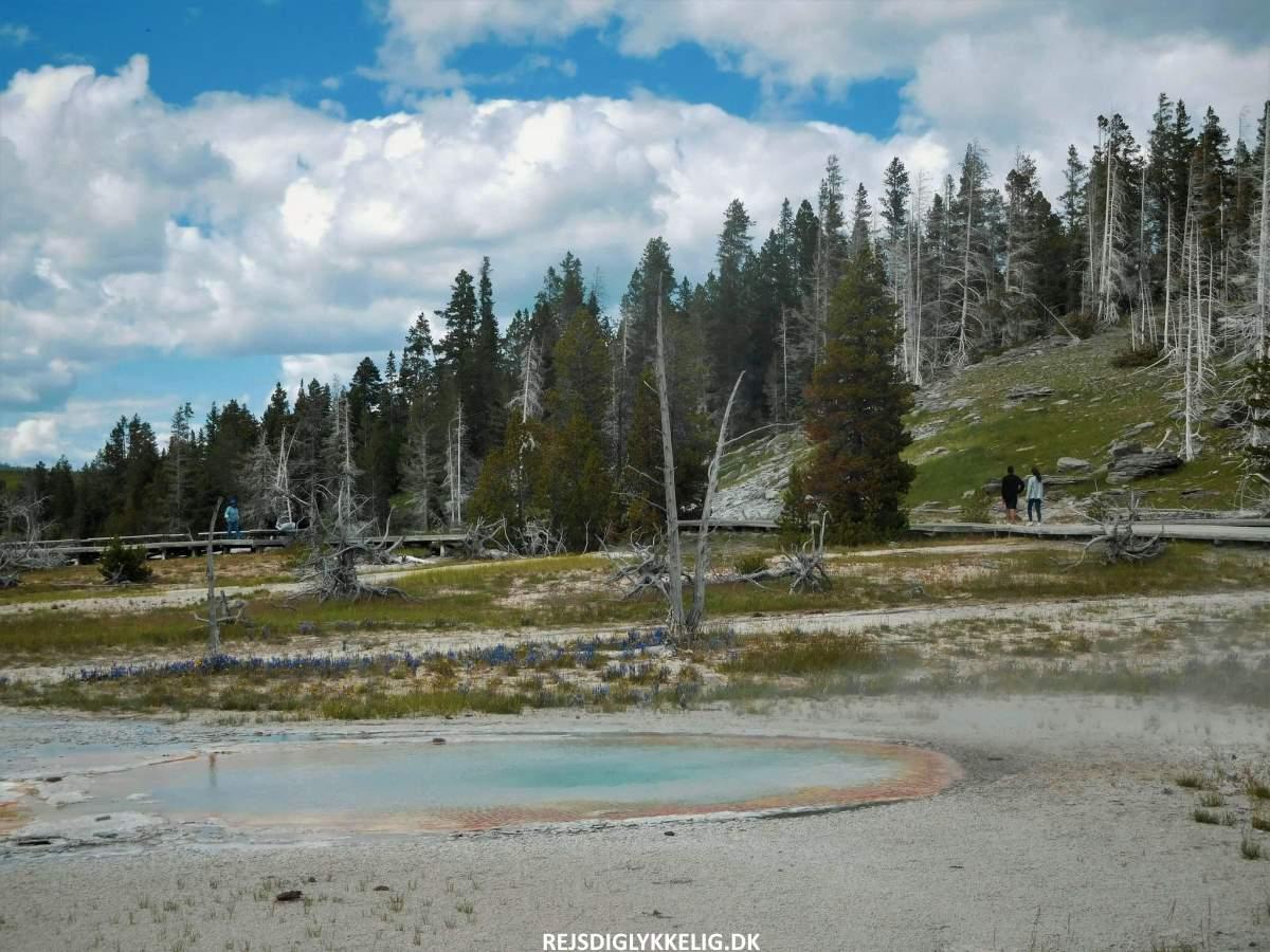 Guide til Yellowstone National Park - Det bedste tidspunkt at besøge parken - Rejs Dig Lykkelig