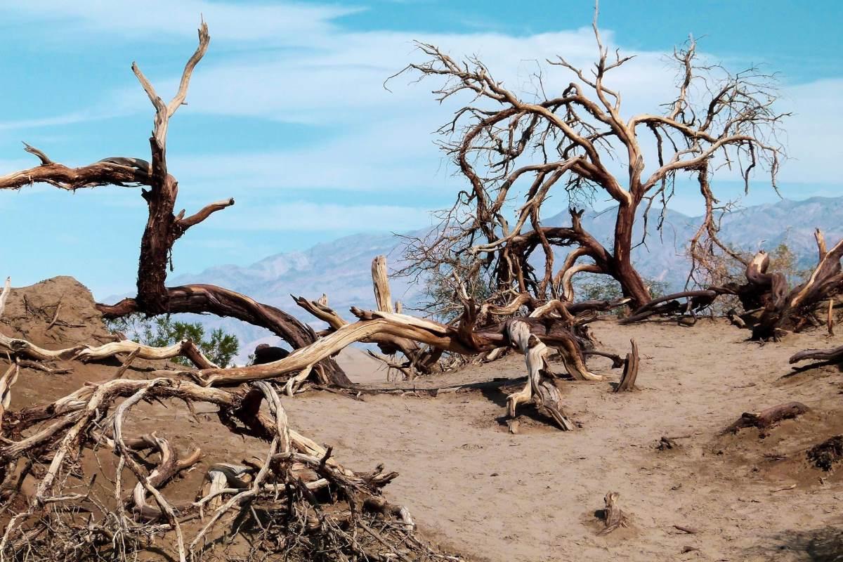 Guide til Death Valley - Dyreliv - Rejs Dig Lykkelig