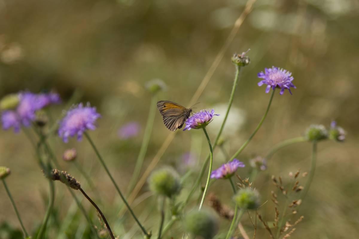Mols Bjerge Nationalpark - Rejs Dig Lykkelig