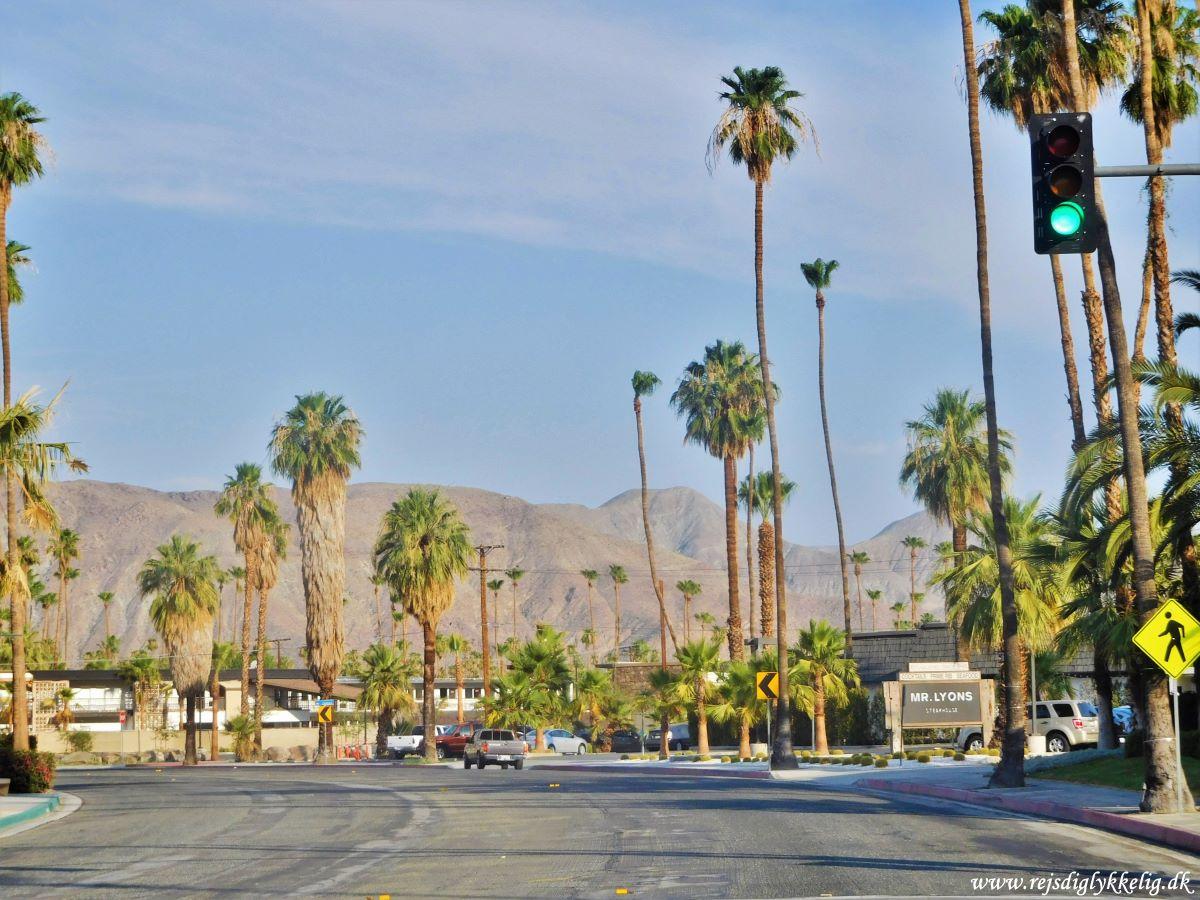 Palm Springs - Rejs Dig Lykkelig
