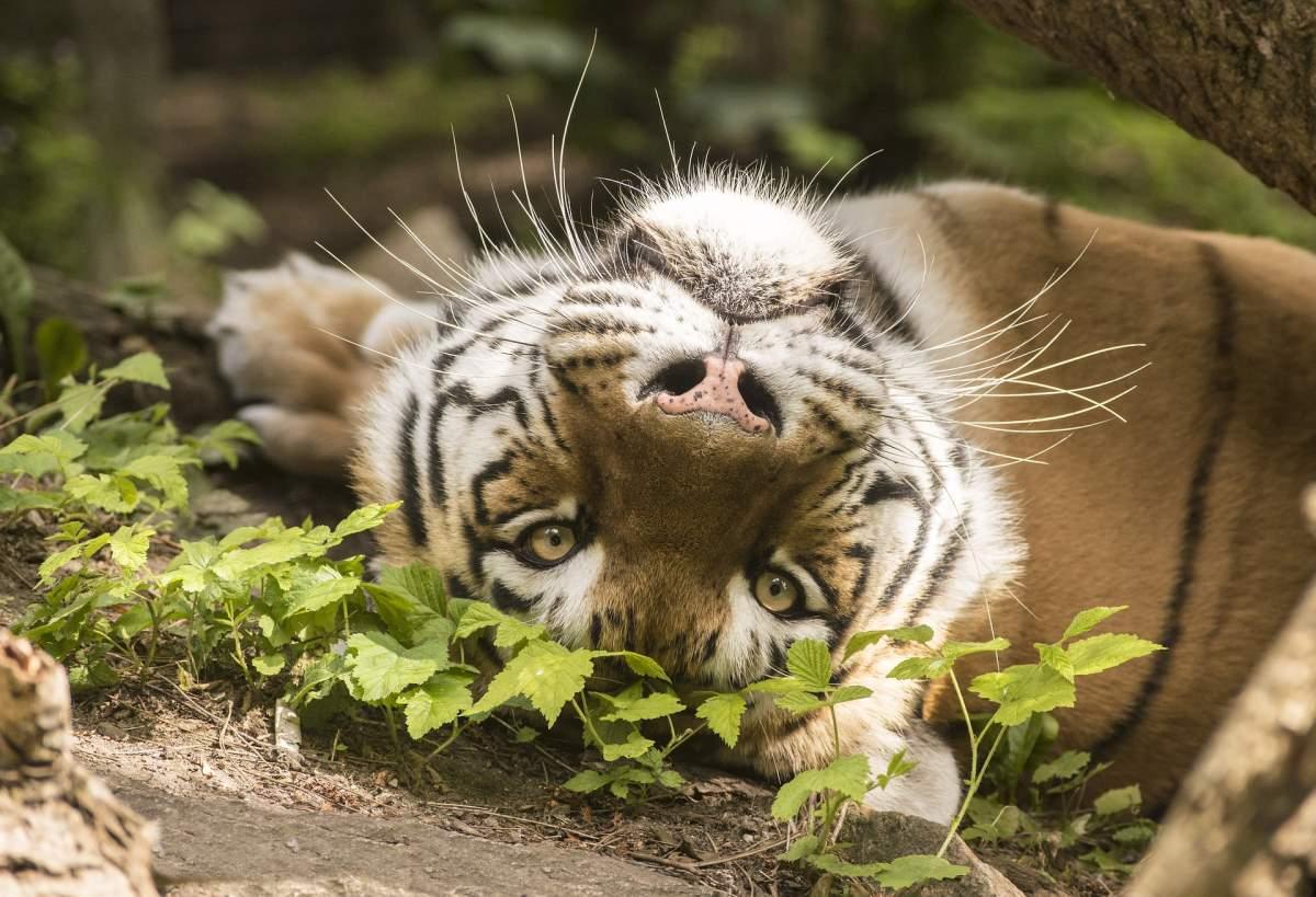 Odense Zoo - Rejs Dig Lykkelig