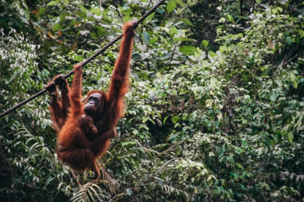 Borneo - Rejs Dig Lykkelig