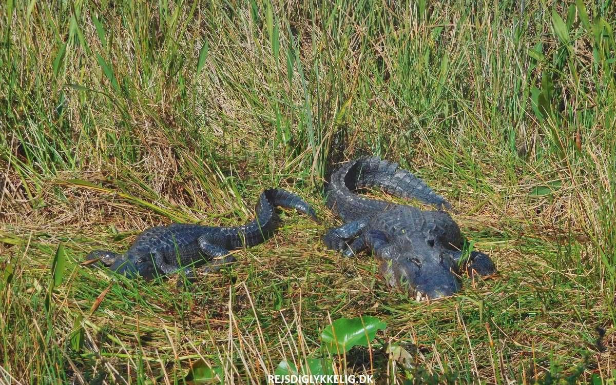 Everglades National Park - Rejs Dig Lykkelig